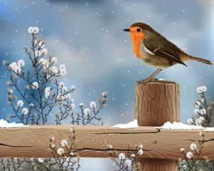 robin in snow a
